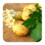 Картофельный разгрузочный день